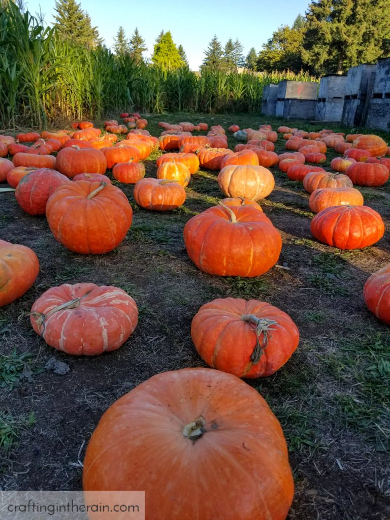 Joes Farms Pumpkin Patch