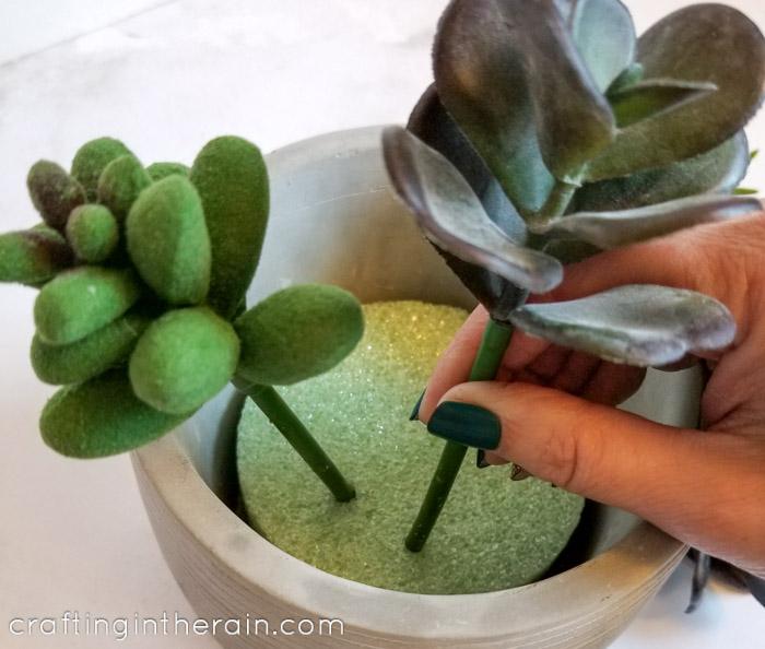 Press succulent into foam