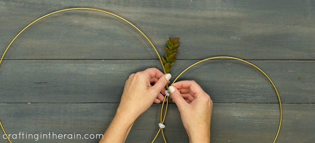 add succulents to wire ring