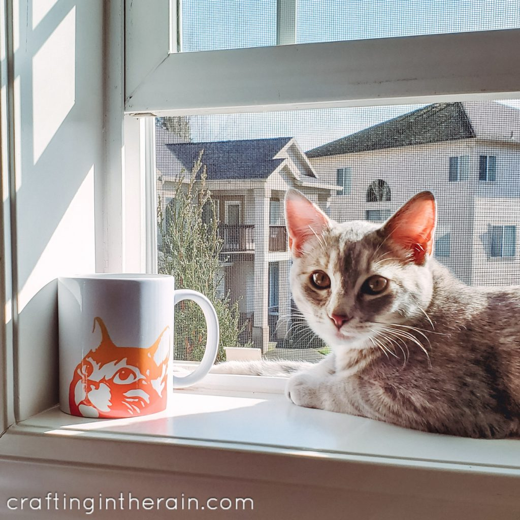 cat mug cat in window
